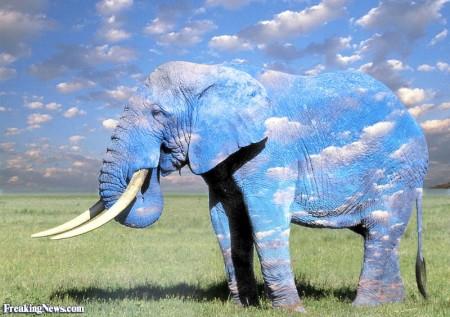 Sky-Elephant--23279
